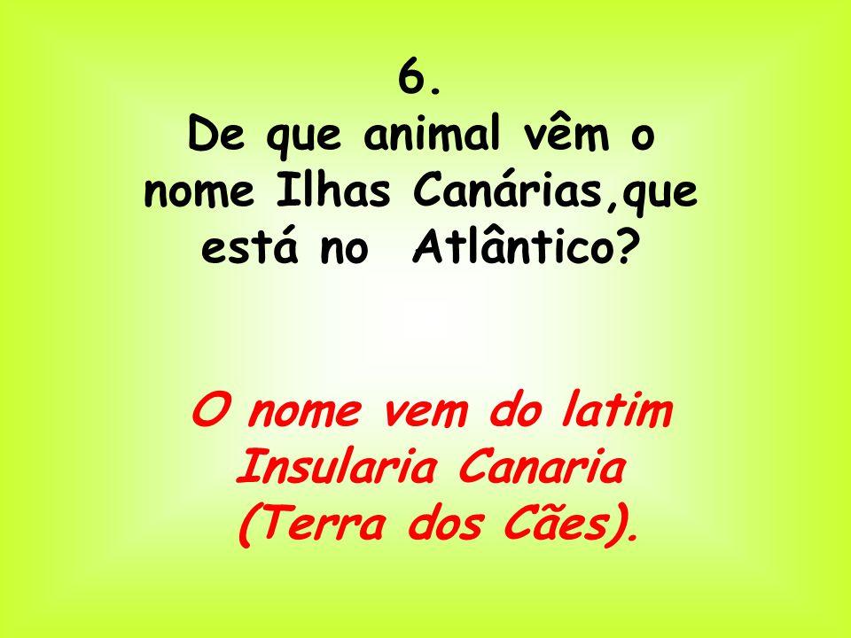6. De que animal vêm o nome Ilhas Canárias,que está no Atlântico? O nome vem do latim Insularia Canaria (Terra dos Cães).