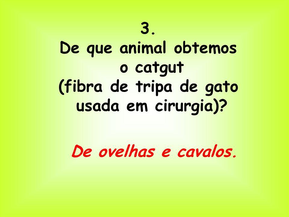 3. De que animal obtemos o catgut (fibra de tripa de gato usada em cirurgia)? De ovelhas e cavalos.