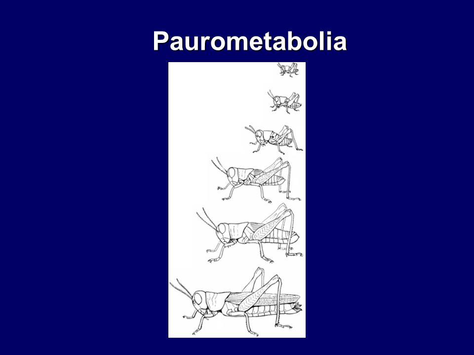 Paurometabolia