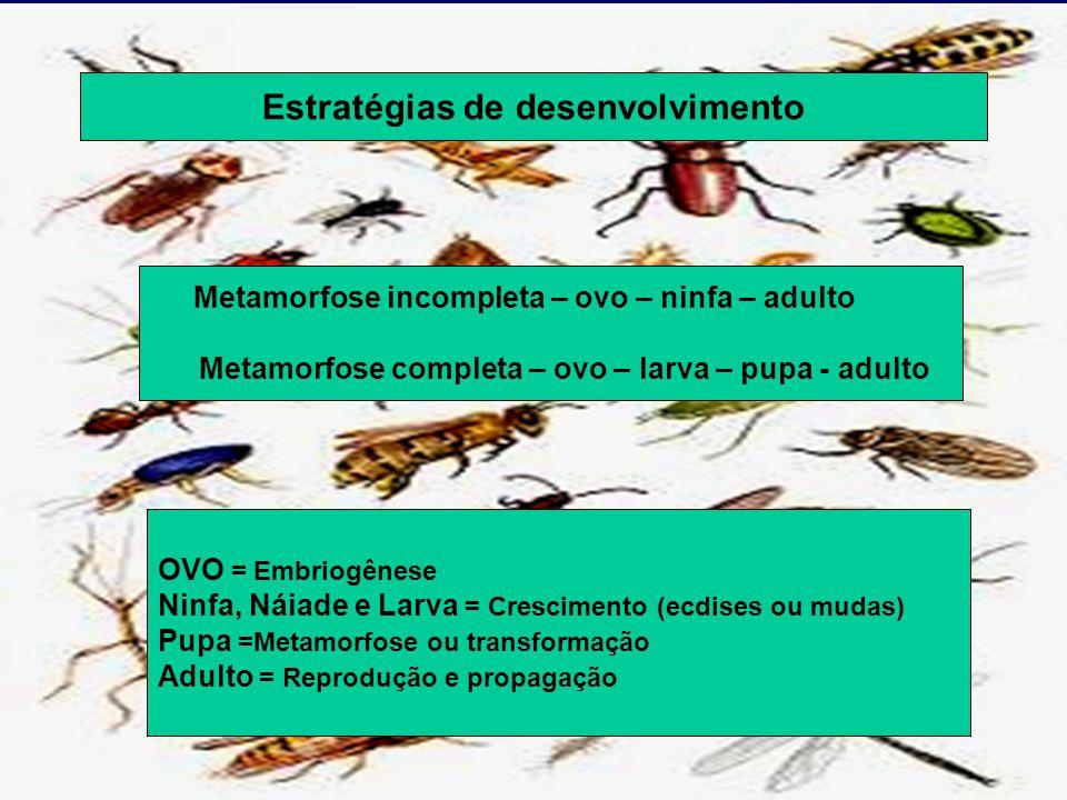 Estratégias de desenvolvimento Metamorfose incompleta – ovo – ninfa – adulto Metamorfose completa – ovo – larva – pupa - adulto OVO = Embriogênese Ninfa, Náiade e Larva = Crescimento (ecdises ou mudas) Pupa =Metamorfose ou transformação Adulto = Reprodução e propagação