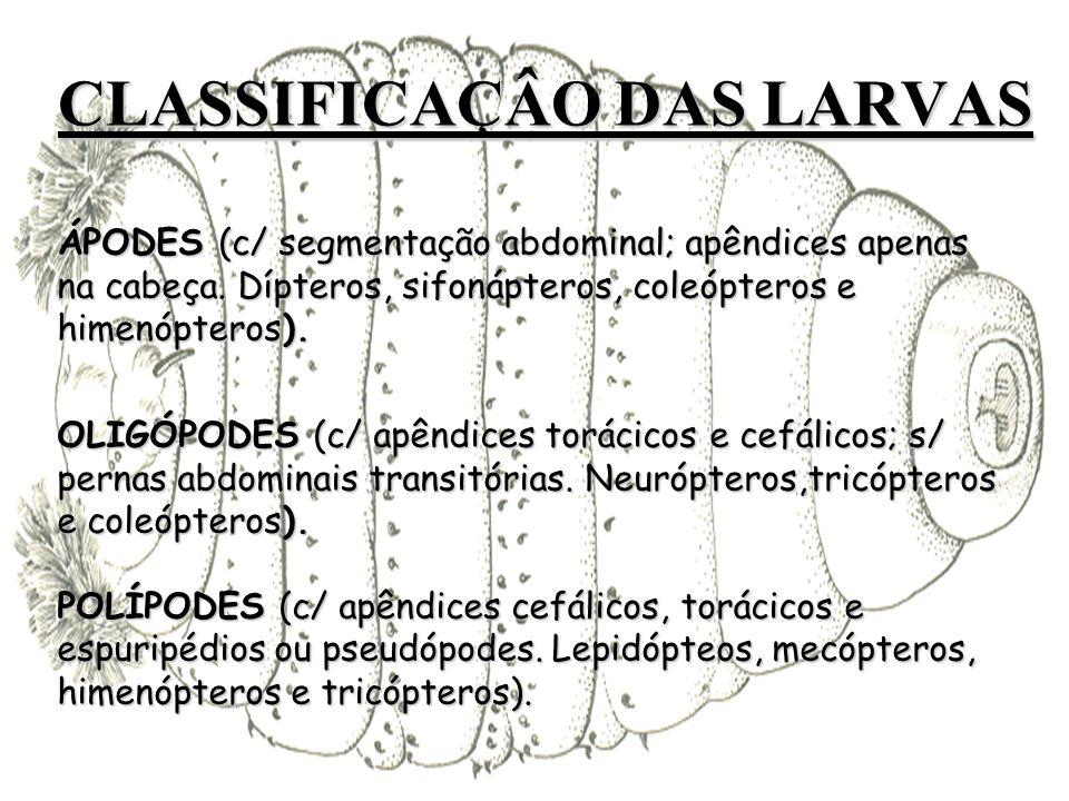 CLASSIFICAÇÂO DAS LARVAS ÁPODES (c/ segmentação abdominal; apêndices apenas na cabeça.
