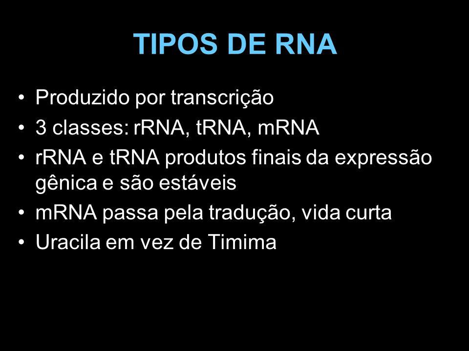 TIPOS DE RNA Produzido por transcrição 3 classes: rRNA, tRNA, mRNA rRNA e tRNA produtos finais da expressão gênica e são estáveis mRNA passa pela trad