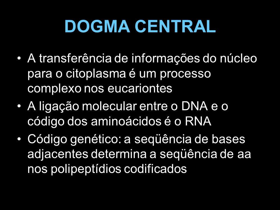 DOGMA CENTRAL A transferência de informações do núcleo para o citoplasma é um processo complexo nos eucariontes A ligação molecular entre o DNA e o có