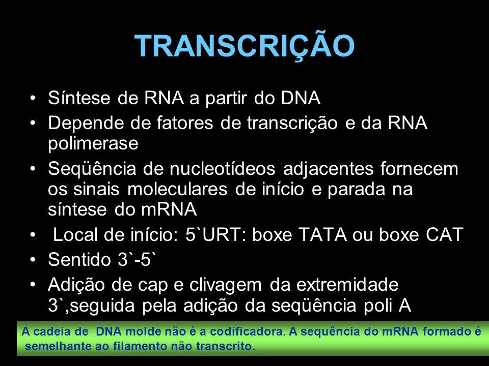 TRANSCRIÇÃO Síntese de RNA a partir do DNA Depende de fatores de transcrição e da RNA polimerase Seqüência de nucleotídeos adjacentes fornecem os sina