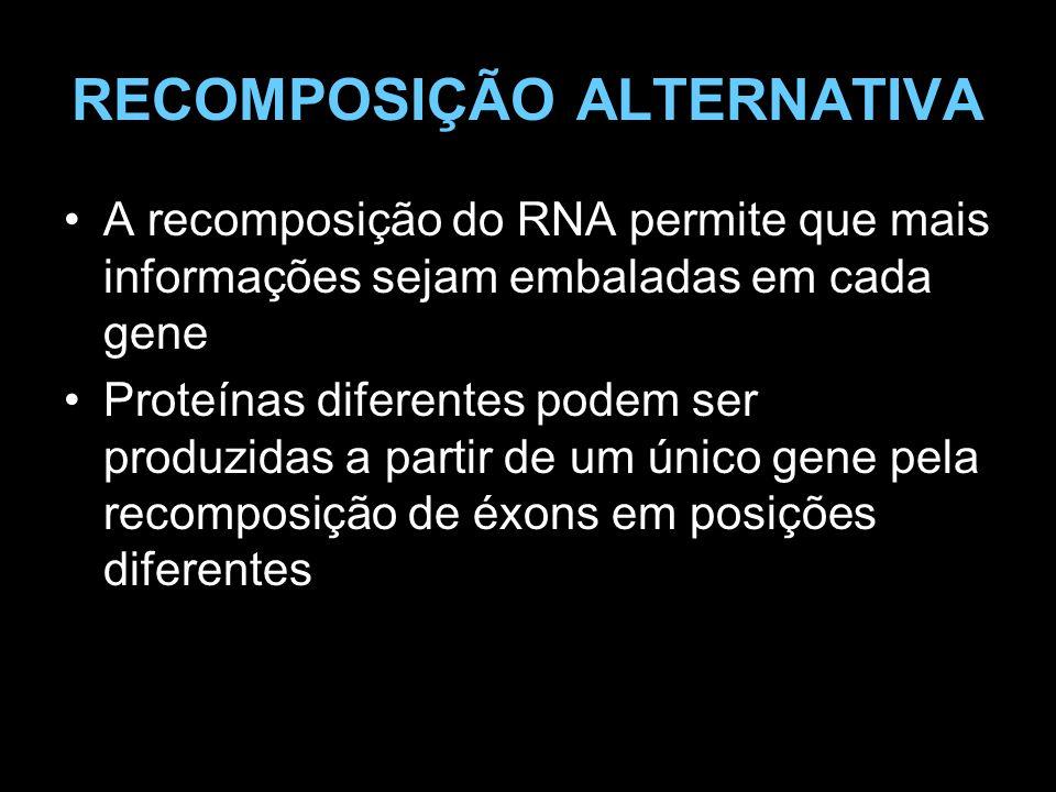 RECOMPOSIÇÃO ALTERNATIVA A recomposição do RNA permite que mais informações sejam embaladas em cada gene Proteínas diferentes podem ser produzidas a p