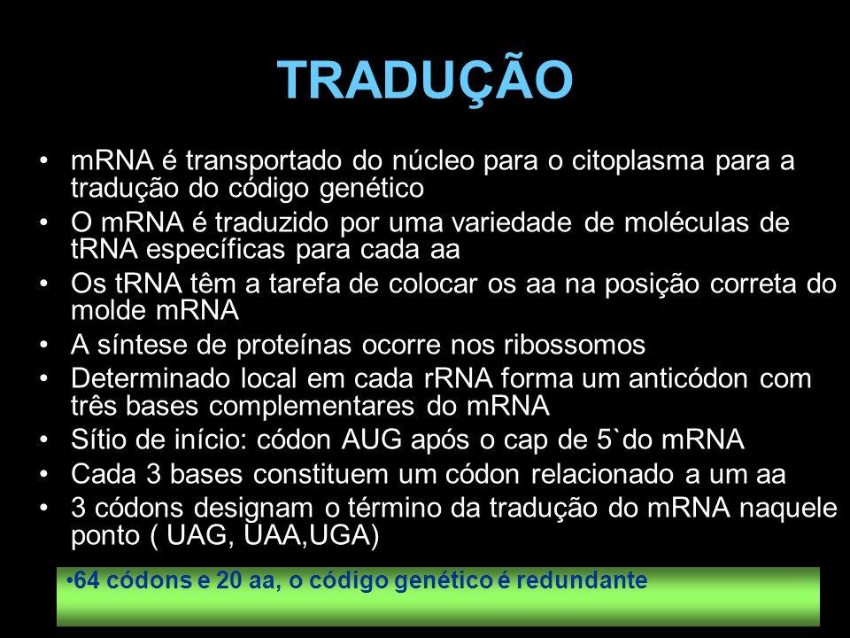 TRADUÇÃO mRNA é transportado do núcleo para o citoplasma para a tradução do código genético O mRNA é traduzido por uma variedade de moléculas de tRNA