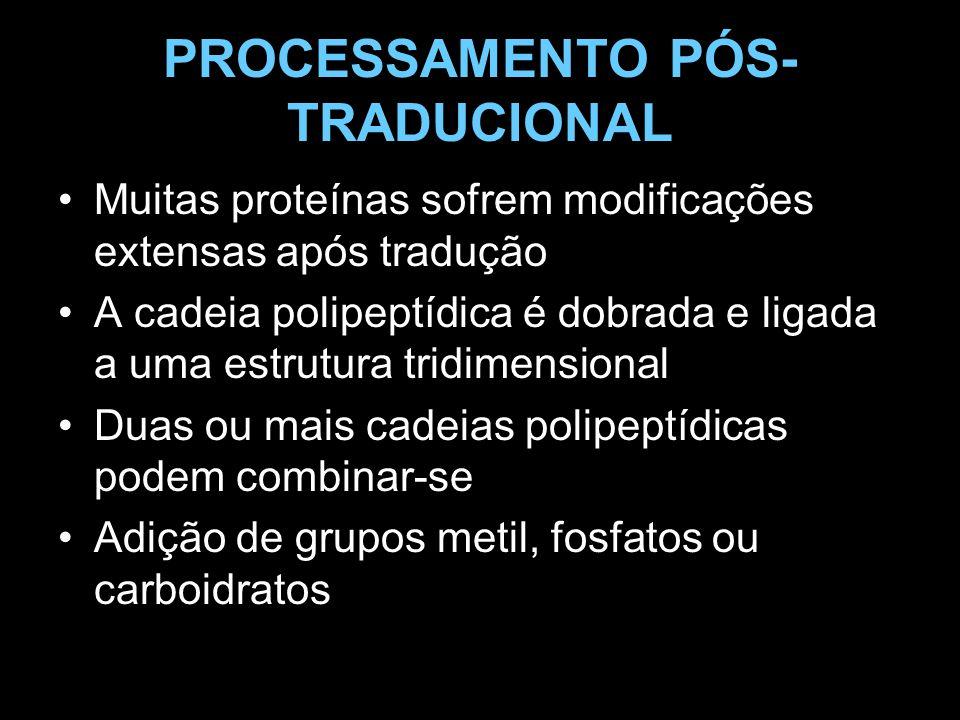 PROCESSAMENTO PÓS- TRADUCIONAL Muitas proteínas sofrem modificações extensas após tradução A cadeia polipeptídica é dobrada e ligada a uma estrutura t