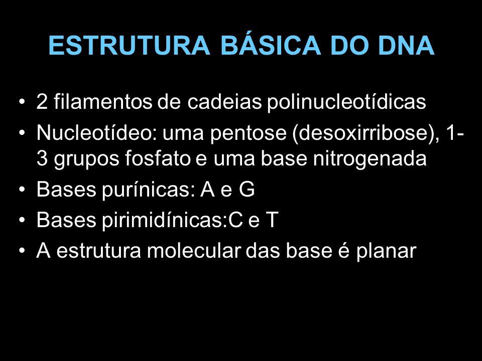 ESTRUTURA BÁSICA DO DNA O açúcar desoxirribose é unido covalentemente às bases e com o fosfato para formar os lados da hélice de DNA A seqüência de nucleotídeos contém o código genético É usado código de trincas que determinam 20 aminoácidos Resulta na produção de proteínas