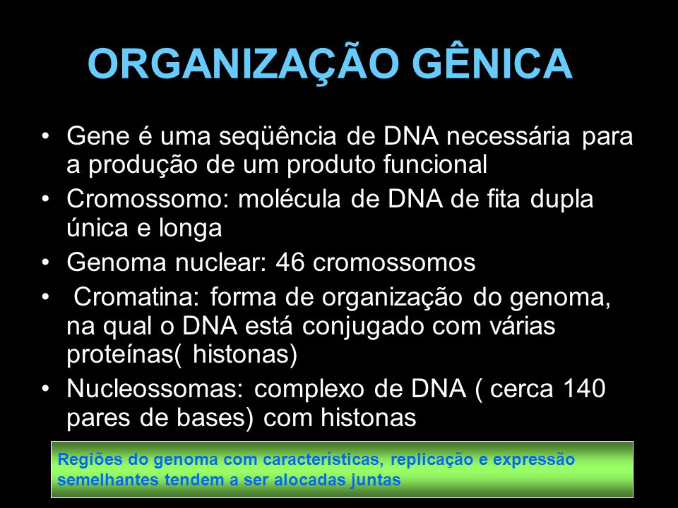 ORGANIZAÇÃO GÊNICA Gene é uma seqüência de DNA necessária para a produção de um produto funcional Cromossomo: molécula de DNA de fita dupla única e lo