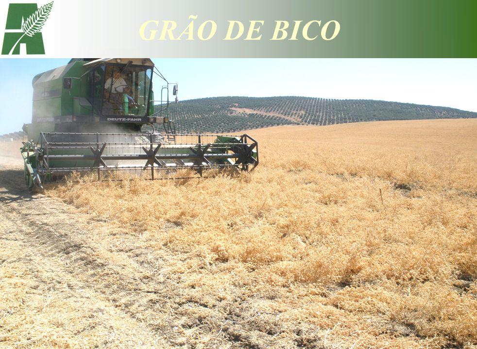 OBJECTIVO: Indústria alimentar VARIEDADES: Fava DENSIDADE DE SEMENTEIRA: 11 - 14 plantas/m 2 200 kg/ha ESPAÇAMENTO ENTRE LINHAS: 70 - 75 cm - Ideal ÉPOCA DE SEMENTEIRA: PRIMAVERA – De 15 de Novembro a 30 de Janeiro ADUBAÇÃO: FUNDO - Com adubo ternário rico em fósforo ou um elementar fosfatado COBERTURA- Não é usual fazer PESTICIDAS: HERBICIDA DE PRÉ-SEMENTEIRA - Glifosato se necessário HERBICIDA DE PRÉ-EMERGÊNCIA - Linurão FUNGICIDA - Clortolonil (preventivo e curativo), Captana (preventivo) INSECTICIDA- Lambda - Cialotrina, Cipermetrina, Deltametrina COLHEITA: Mês de Julho PRODUÇÃO: Sequeiro - 1000 a 1500 kg/ha CONTRATOS C/ AGRICULTORES PREÇO FINAL – 520-550 /ton, de semente limpa por crivo de 6,5 x 20mm, sem grãos picados, roídos ou manchados.