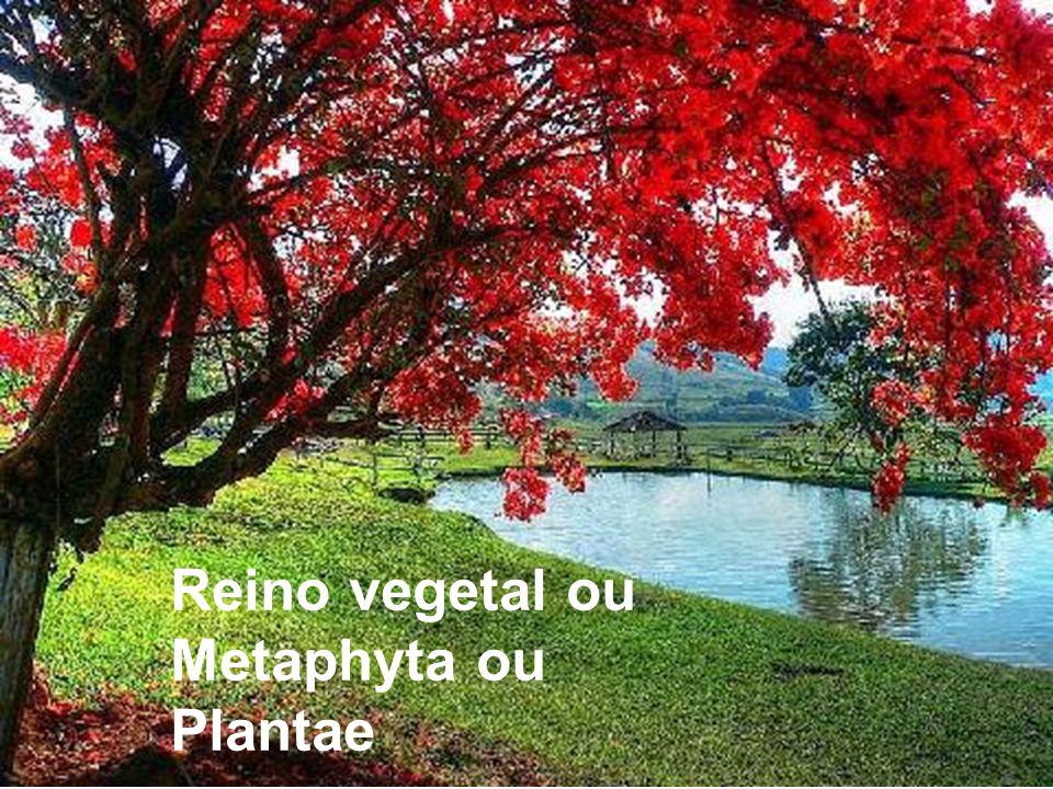 Todas as plantas são seres haplodiplobiontes, por isso reproduzem- se por metagênese ou alternância de gerações.