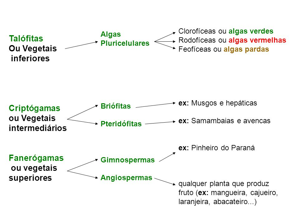 Qual foi a seqüência evolutiva dos vegetais.
