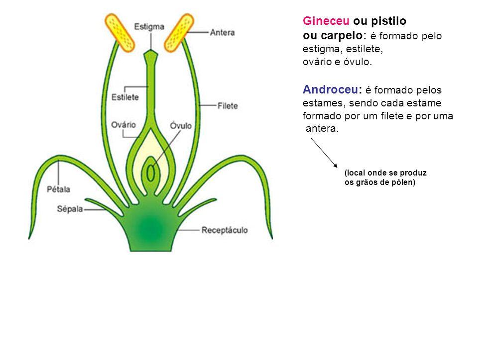 Gineceu ou pistilo ou carpelo: é formado pelo estigma, estilete, ovário e óvulo.
