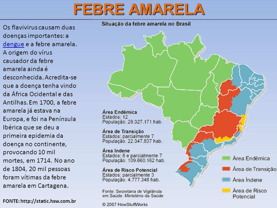 FEBRE AMARELA Os flavivirus causam duas doenças importantes: a dengue e a febre amarela.