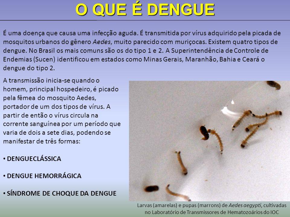 O QUE É DENGUE É uma doença que causa uma infecção aguda.