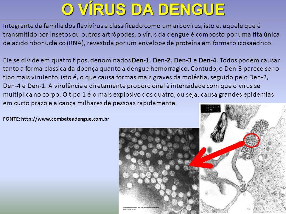 Integrante da família dos flavivírus e classificado como um arbovírus, isto é, aquele que é transmitido por insetos ou outros artrópodes, o vírus da dengue é composto por uma fita única de ácido ribonucléico (RNA), revestida por um envelope de proteína em formato icosaédrico.