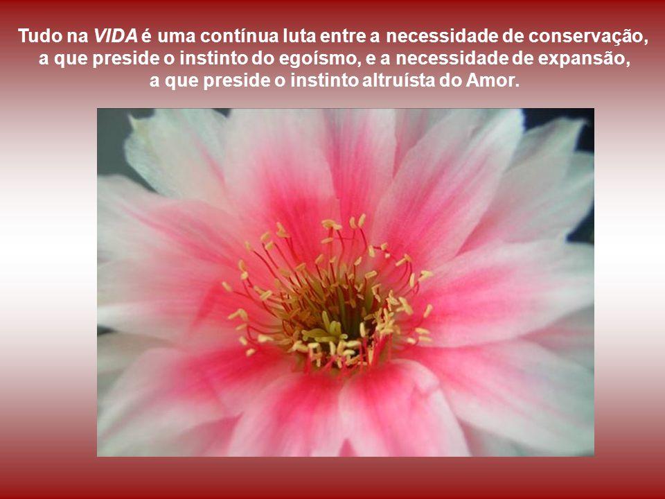Sem amor, por mais rica que seja a VIDA, ela é estúpida, sem objetivo, destituída de sentido.