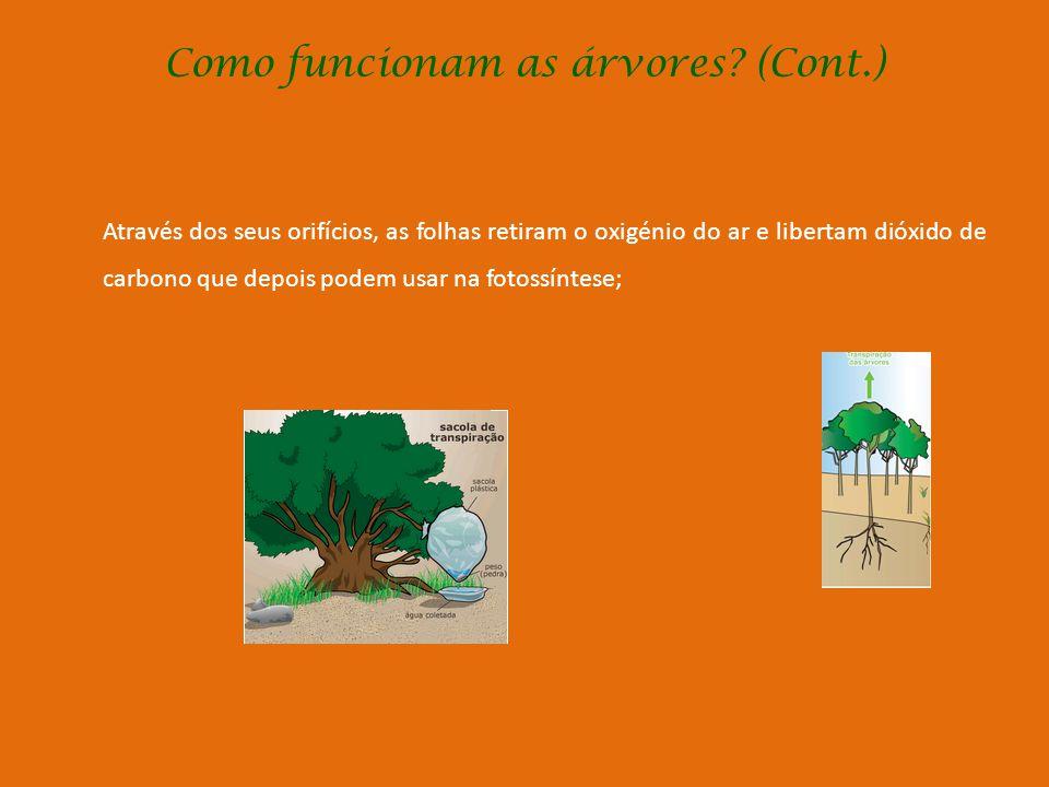 Como funcionam as árvores? (Cont.) Como procuram a água e os sais minerais no solo? As raízes da árvore penetram na terra por vezes a grande profundid