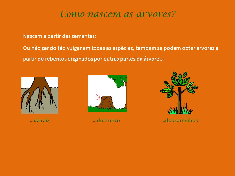 Como funcionam as árvores? (Cont.) Através dos seus orifícios, as folhas retiram o oxigénio do ar e libertam dióxido de carbono que depois podem usar