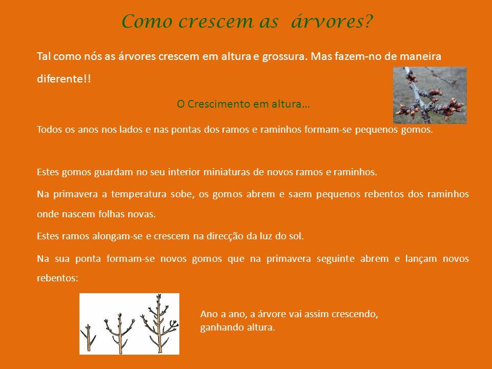 Como nascem as árvores? Nascem a partir das sementes; Ou não sendo tão vulgar em todas as espécies, também se podem obter árvores a partir de rebentos