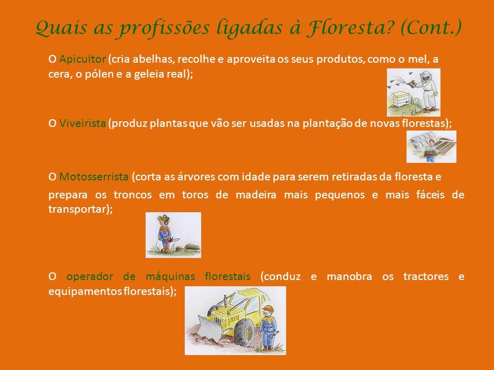 Quais as profissões ligadas à Floresta? Produtor Florestal (é o dono da terra, das árvores que nela existem e do que elas produzem); Trabalhador Flore