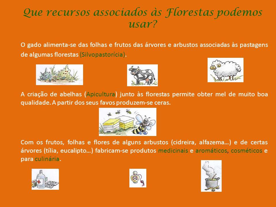 Porque são as Florestas tão importantes? (Cont.) Dos Pinheiros extrai-se a resina usada no fabrico de: Colas, Vernizes, Tintas e Aguarrás A partir da