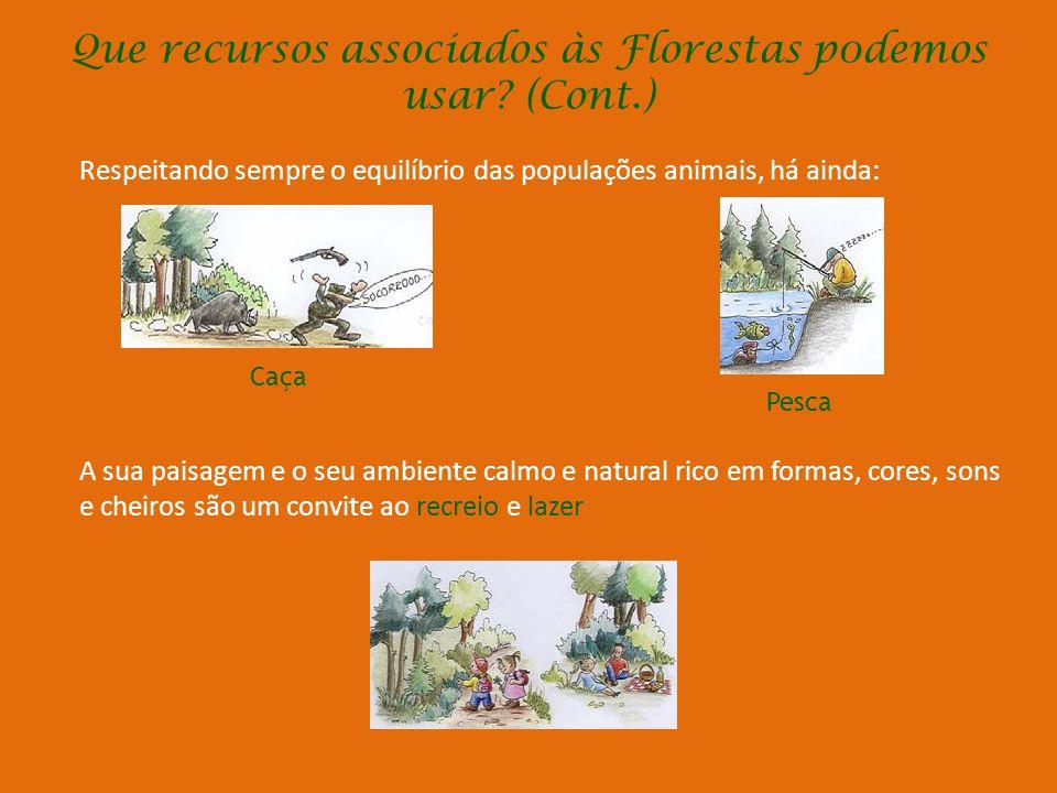 Que recursos associados às Florestas p0demos usar? O gado alimenta-se das folhas e frutos das árvores e arbustos associadas às pastagens de algumas fl