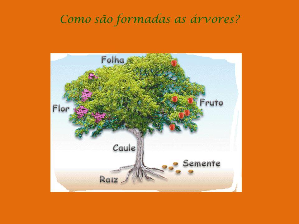 Como são as árvores? As árvores têm vida, são seres vivos como nós; Pertencem ao reino vegetal e têm algumas características que as distinguem dos ani