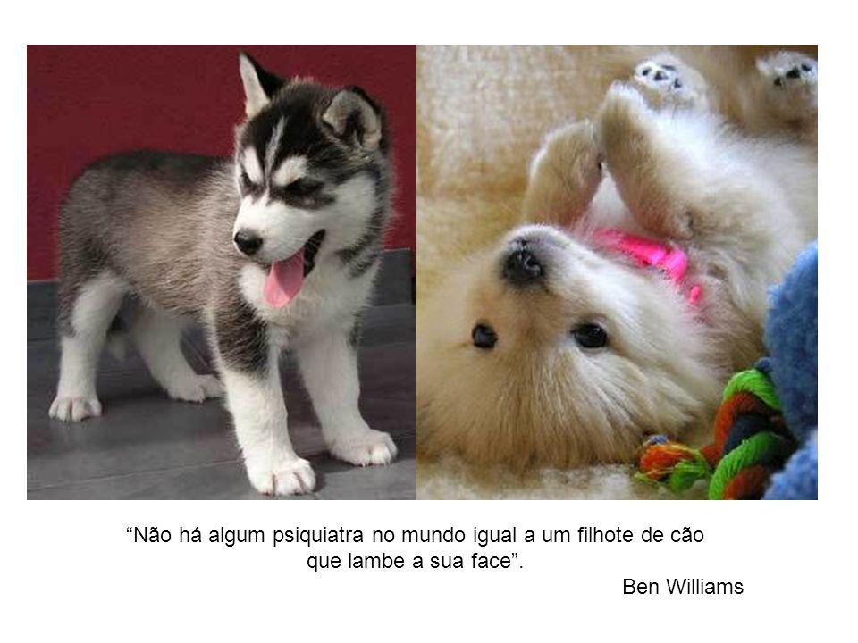 Não há algum psiquiatra no mundo igual a um filhote de cão que lambe a sua face. Ben Williams