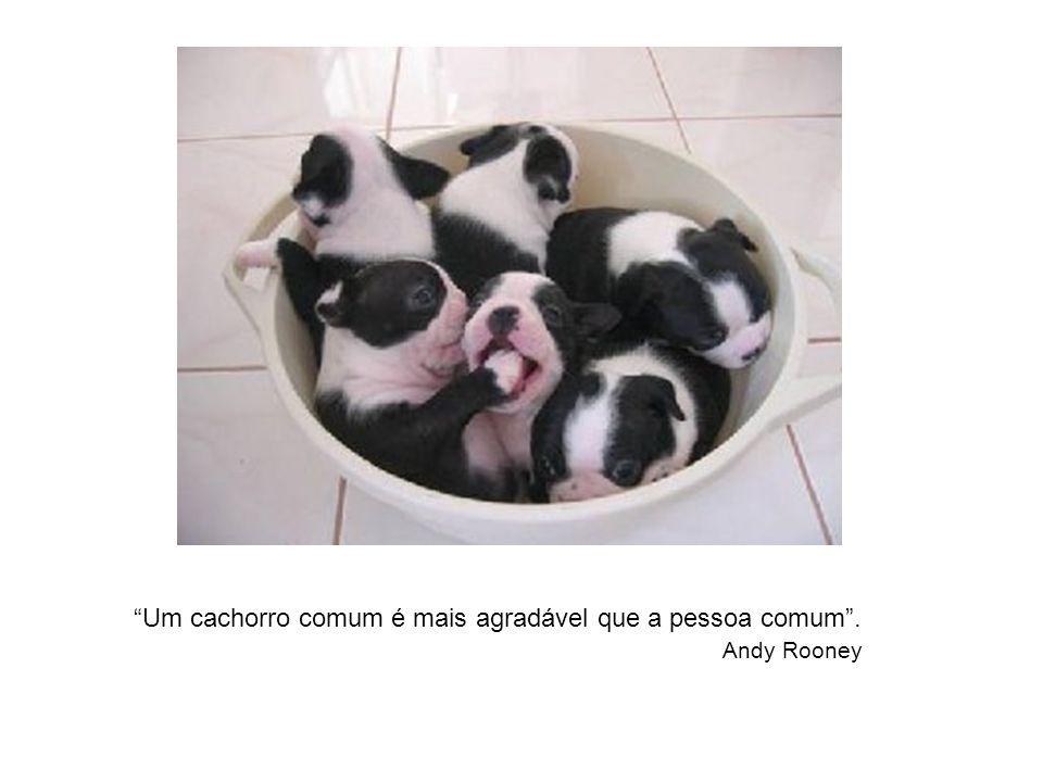 A exceção de algumas mães, um cão é o único ser na Terra que o ama mais que a ele mesmo. Anônimo A pessoa que não conhece o gosto do sabão, nunca lavo