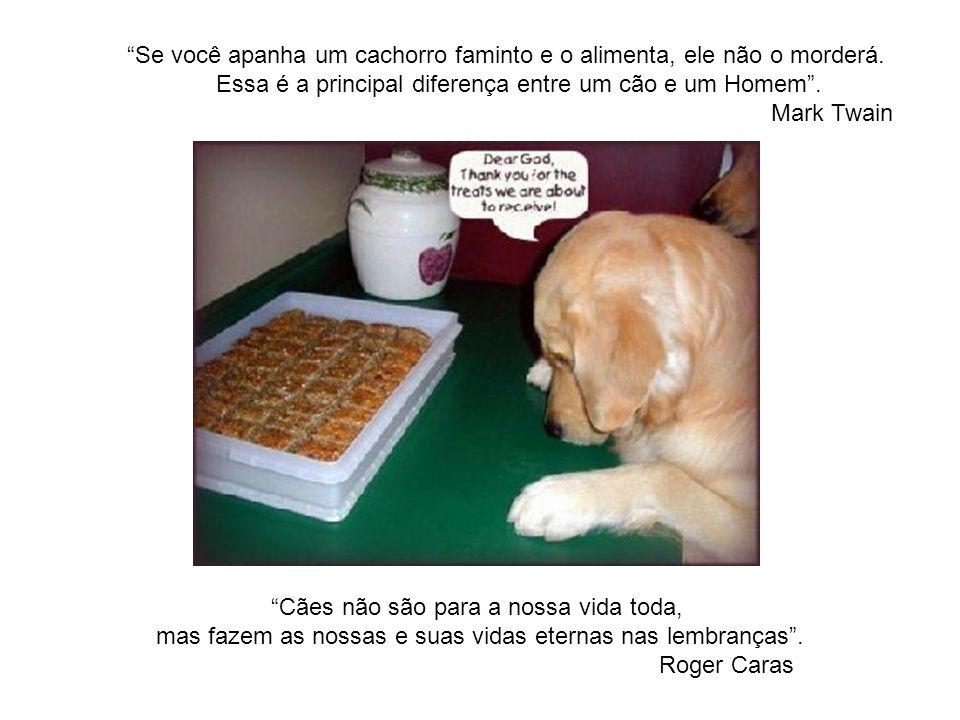 Se você apanha um cachorro faminto e o alimenta, ele não o morderá.