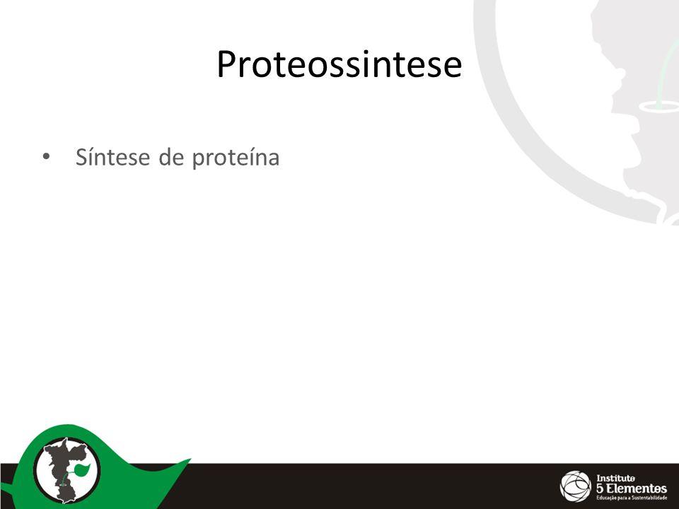 Proteólise É a quebra da molécula de proteína( decomposição) A planta fica com aminoácidos livres em sua seiva