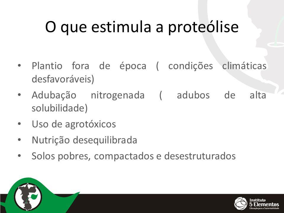 O que estimula a proteólise Plantio fora de época ( condições climáticas desfavoráveis) Adubação nitrogenada ( adubos de alta solubilidade) Uso de agrotóxicos Nutrição desequilibrada Solos pobres, compactados e desestruturados