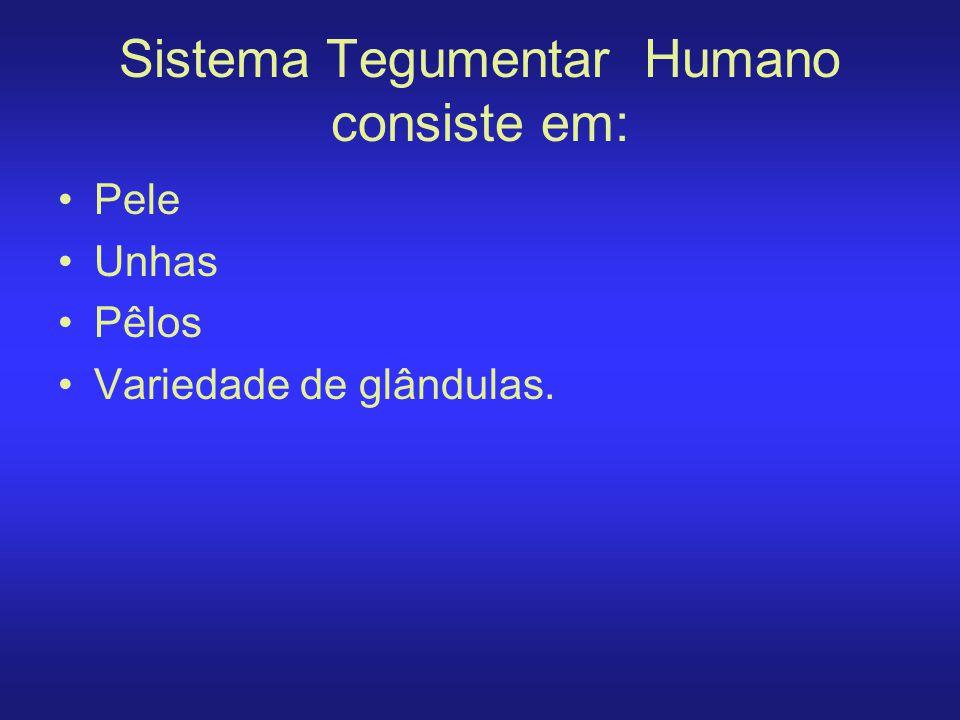 Sistema Tegumentar Humano consiste em: Pele Unhas Pêlos Variedade de glândulas.