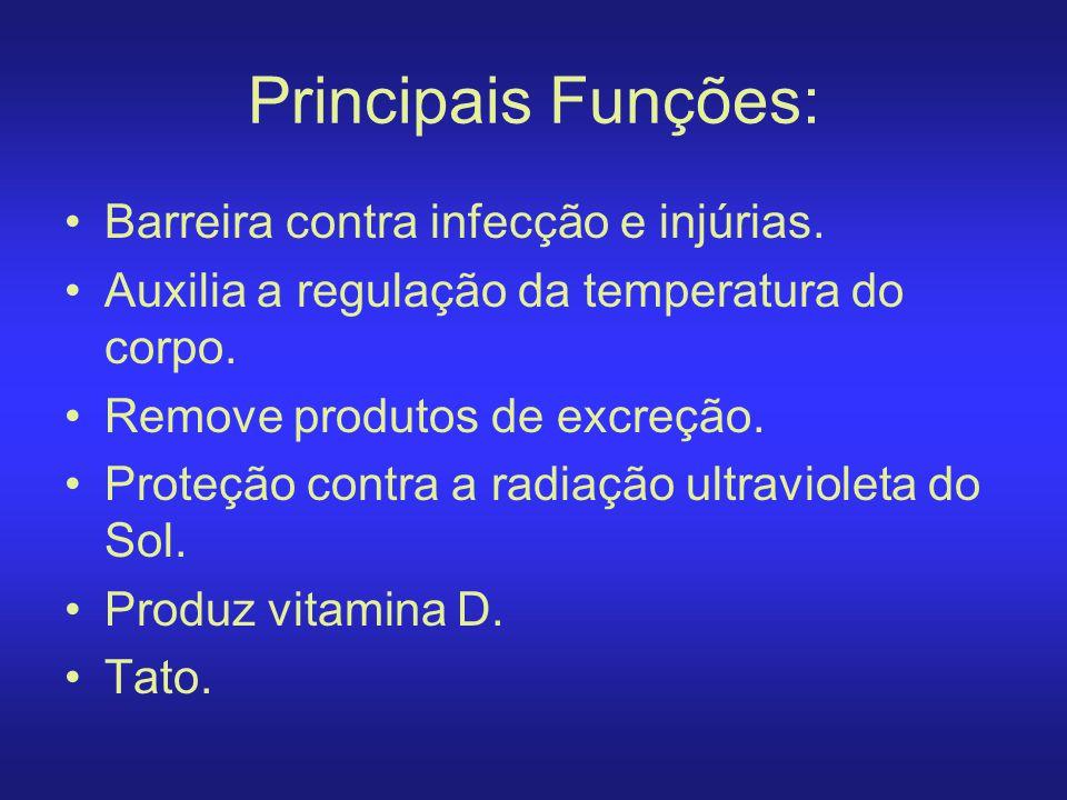 Principais Funções: Barreira contra infecção e injúrias. Auxilia a regulação da temperatura do corpo. Remove produtos de excreção. Proteção contra a r