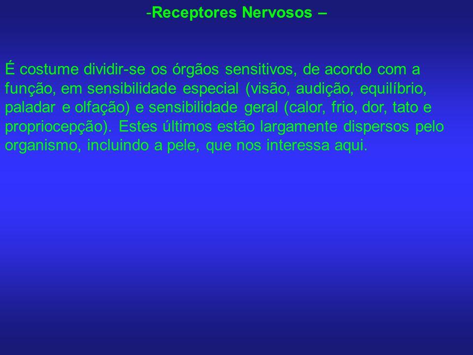 -Receptores Nervosos – É costume dividir-se os órgãos sensitivos, de acordo com a função, em sensibilidade especial (visão, audição, equilíbrio, palad