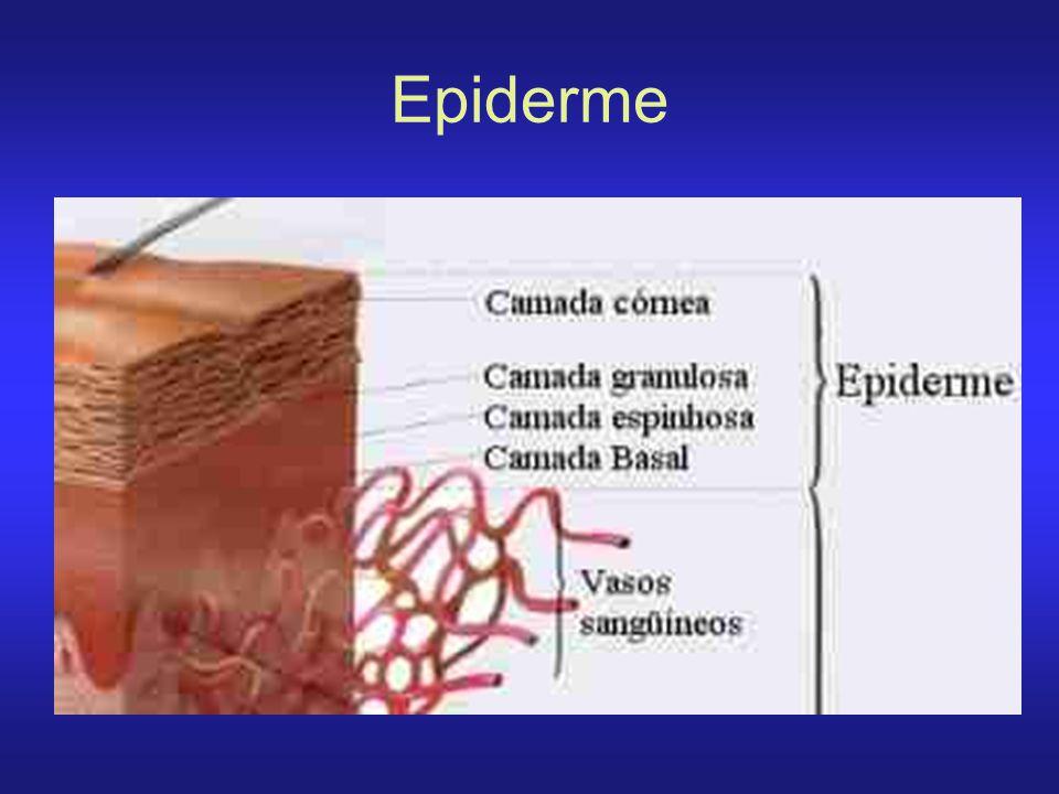 Sardas ou Efélides As sardas ou efélides são manchas onde a distribuição dos pigmentos melânicos costuma ser homogêneo, embora possa ter a borda irregular.
