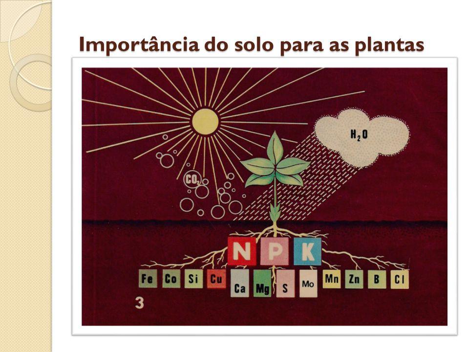 Importância do solo para as plantas