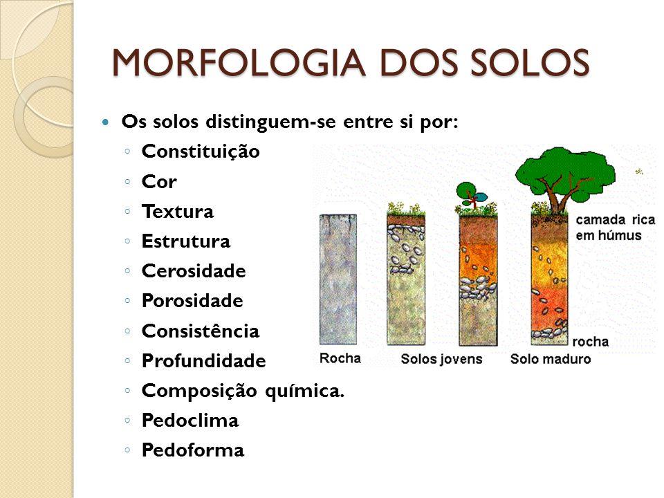 MORFOLOGIA DOS SOLOS Os solos distinguem-se entre si por: Constituição Cor Textura Estrutura Cerosidade Porosidade Consistência Profundidade Composiçã