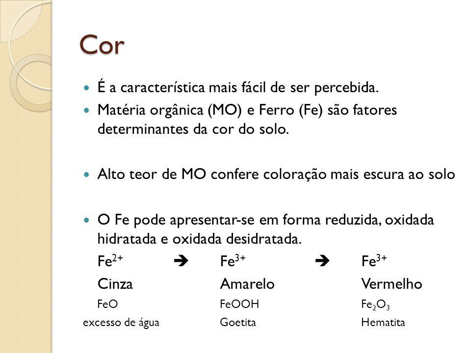 Cor É a característica mais fácil de ser percebida. Matéria orgânica (MO) e Ferro (Fe) são fatores determinantes da cor do solo. Alto teor de MO confe