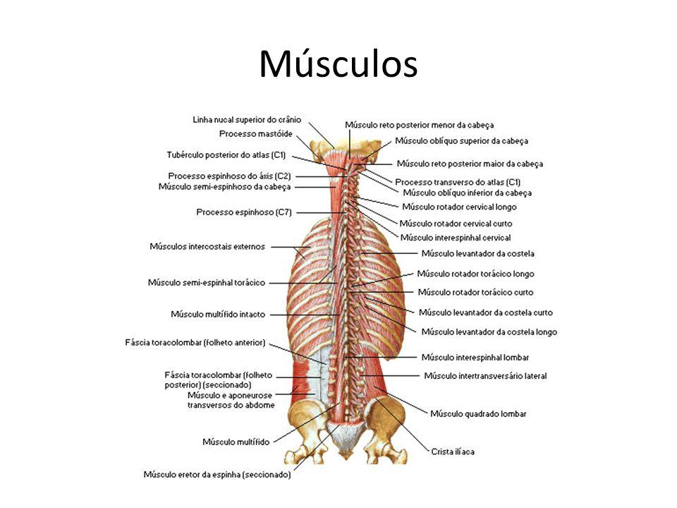 Lombalgia e Lombociatalgia Problema de saúde pública Cerca de 80% das pessoas tem algum tipo de dor lombar em alguma fase da vida.