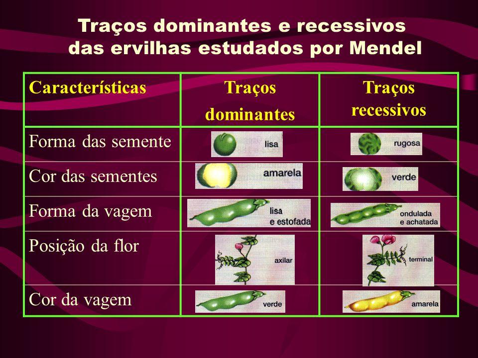 Traços dominantes e recessivos das ervilhas estudados por Mendel CaracterísticasTraços dominantes Traços recessivos Forma das semente Cor das sementes