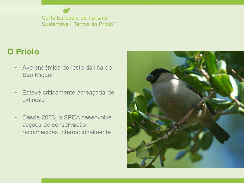 O Priolo Ave endémica do leste da ilha de São Miguel. Esteve criticamente ameaçada de extinção Desde 2003, a SPEA desenvolve acções de conservação rec