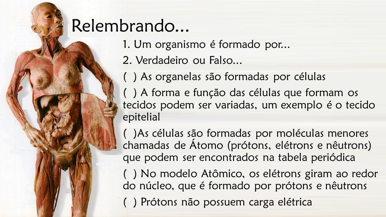 Relembrando... 1. Um organismo é formado por... 2. Verdadeiro ou Falso... ( ) As organelas são formadas por células ( ) A forma e função das células q