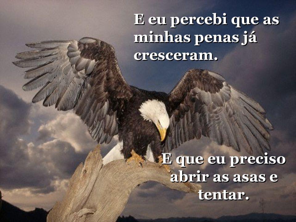 E que eu preciso abrir as asas e tentar.E que eu preciso abrir as asas e tentar.