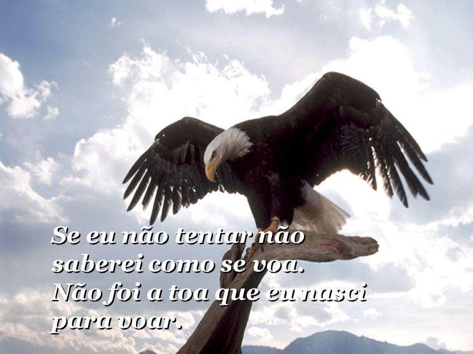 E que eu preciso abrir as asas e tentar. E que eu preciso abrir as asas e tentar. E eu percebi que as minhas penas já cresceram. E eu percebi que as m