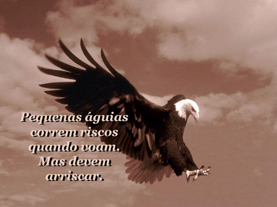 Pequenas águias correm riscos quando voam.Mas devem arriscar.