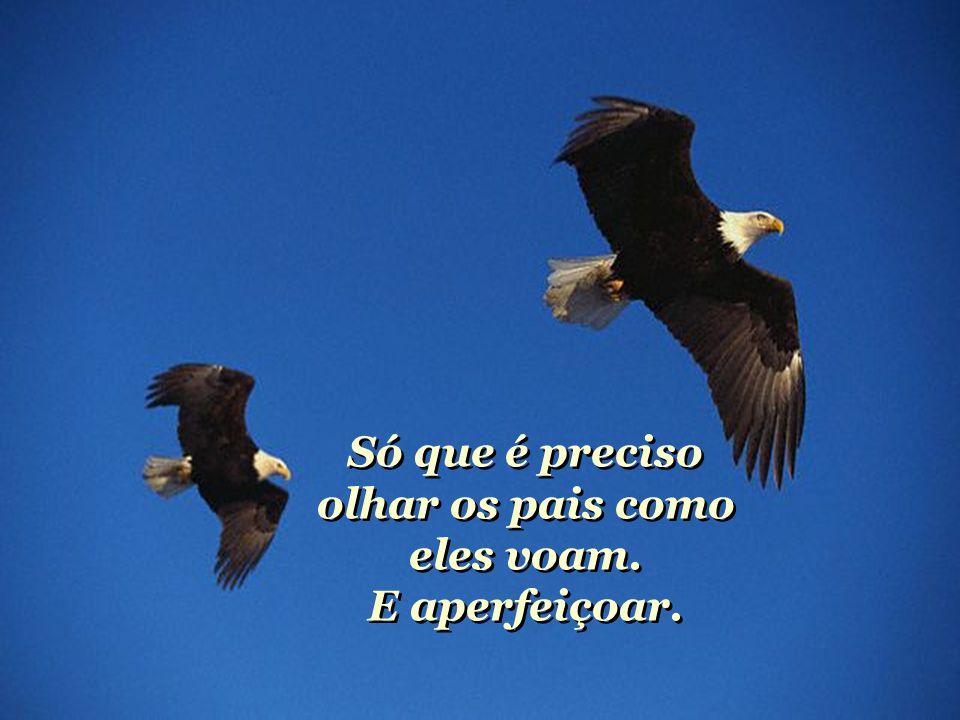 Pequenas águias correm riscos quando voam. Mas devem arriscar. Pequenas águias correm riscos quando voam. Mas devem arriscar.