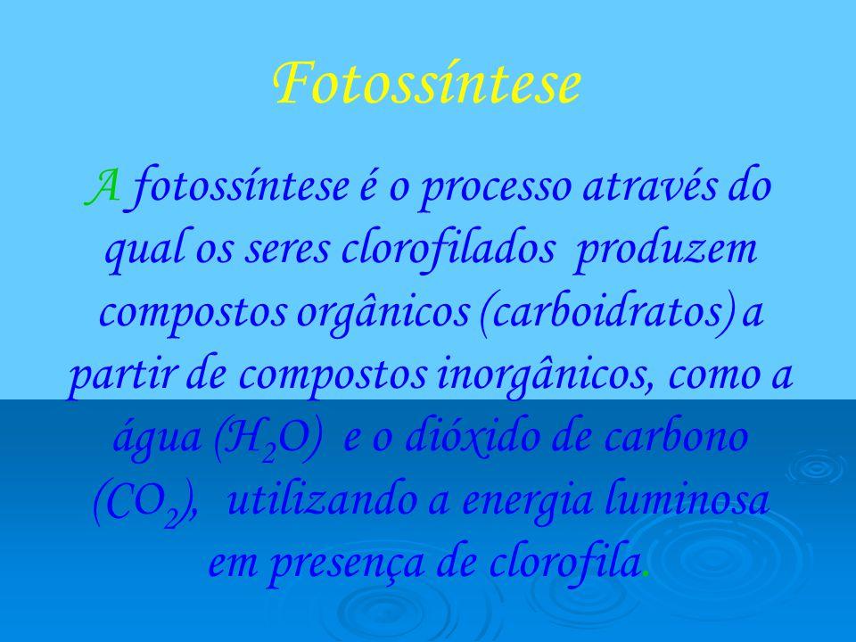 Fotossíntese A fotossíntese é o processo através do qual os seres clorofilados produzem compostos orgânicos (carboidratos) a partir de compostos inorg