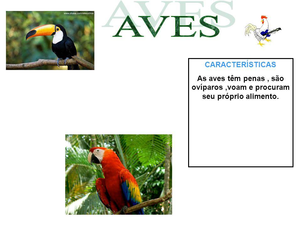 CARACTERÍSTICAS As aves têm penas, são ovíparos,voam e procuram seu próprio alimento.